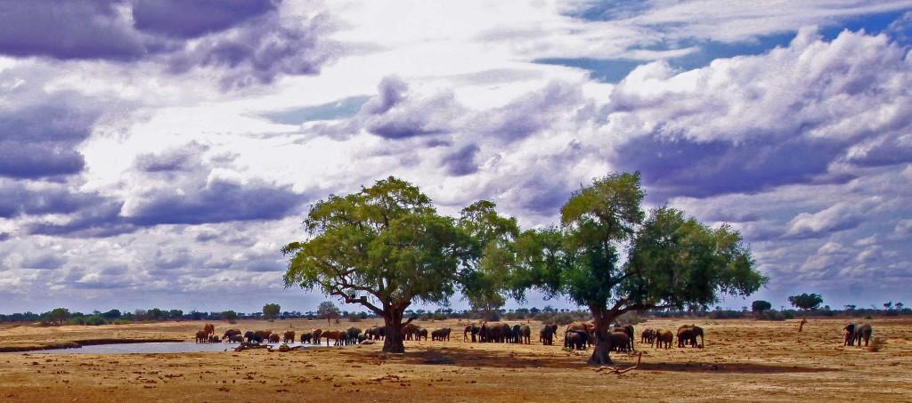 God Creates the Animals - Kenya Landscape