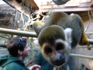 Tripp York with Jeeves the Squirrel Monkey