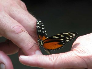 Butterfly-on-hands