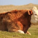 Vegangelical Animal Theology