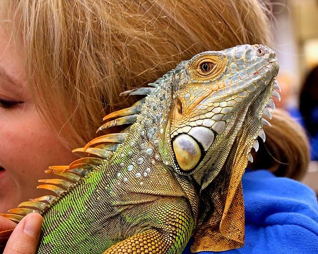 Lizard cuddle