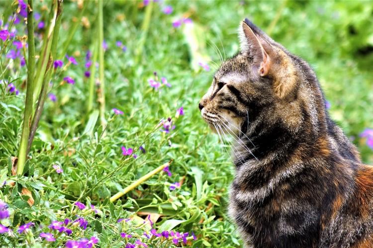 Cat on watch