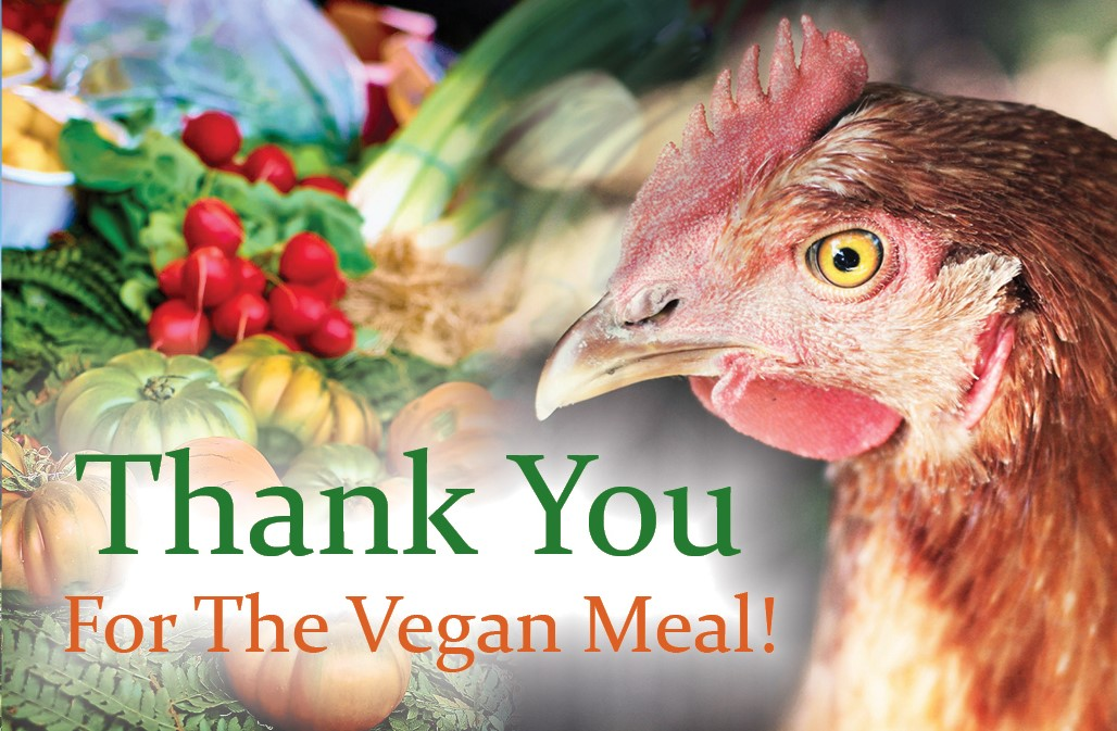 Sarx Vegan Thank You cards