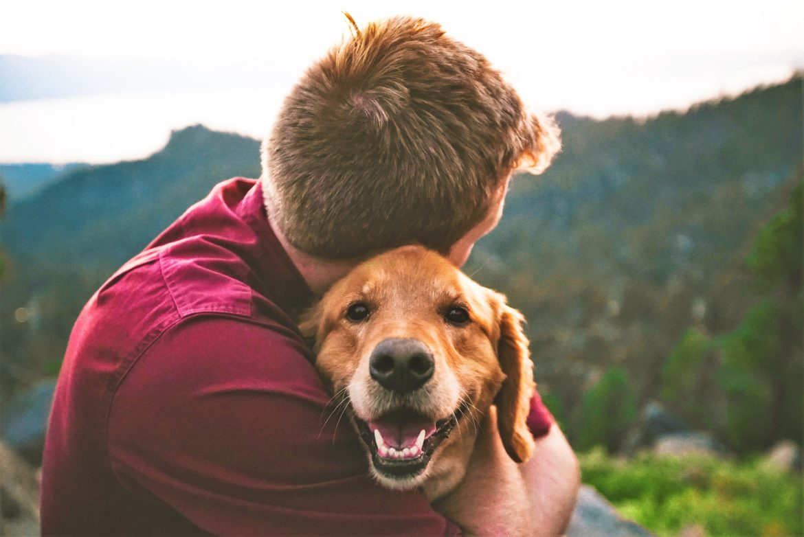 Prayer and Pastoral Care for Animal Carers - Susan Bubbers