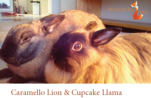 Caramello Lion and Cupcake Llama
