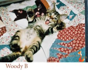 Woody B